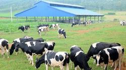 Vinamilk nâng tỷ lệ sở hữu tại công ty sở hữu thương hiệu sữa Mộc Châu