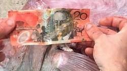 """Ngư dân Úc tìm thấy """"món quà"""" không ngờ khi mổ bụng cá hồng"""