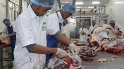 Ở nơi hàng nghìn con bò được chăm sóc đặc biệt theo tiêu chuẩn Úc