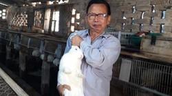 Thái Nguyên: 12 năm nuôi thỏ New Zealand to bự, năm nào cũng lãi