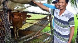 4 năm, giúp hơn 2.200 hộ thoát nghèo từ đàn vịt, con bò