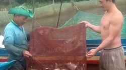Hậu Giang: Bắt cá ruộng nuôi đăng quầng mùa lũ, cá ngon, tươi rói