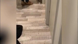 Video: Mèo về nhà với vòng cổ bất thường, chủ choáng khi phát hiện con vật cực độc bám trên