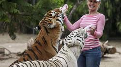 Ngày ngày chơi với bầy hổ nuôi từ nhỏ, bỗng một ngày bị hai con tấn công kinh hoàng