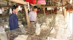 Sơn La: Lũ cuốn sạch 1.000 con vịt trời, gượng dậy nuôi thỏ trắng