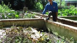 Đồng Tháp: Làm bồn trong hồ để nuôi lươn, thu cả tấn, bán giá cao