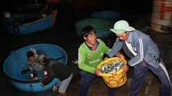 Mùa trở bấc, đi chợ đêm bán toàn cá trích tươi rói, ngọt tận răng