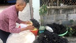 An Giang: Mùa trái rừng chín đen, trèo hái nguy hiểm, ai ăn đều mê