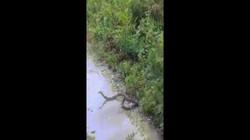 Video: Người đàn ông Malaysia tung đòn chém bay đầu hổ mang chúa