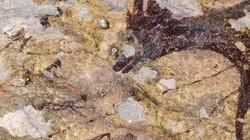 Sinh vật nửa người, nửa thú trong bức tranh hang động cổ xưa nhất thế giới