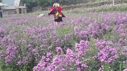 Thái Nguyên: Đã mắt ngắm đủ loại hoa ở phim trường Wonderland