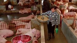 """Đề xuất """"sốc"""": Dừng chi tiền hỗ trợ tiêu hủy lợn bị dịch tả châu Phi"""