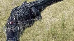 Tiết lộ mới về thi thể người đàn ông Mỹ trong bụng cá sấu nặng 2 tạ