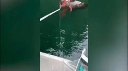 Video: Bắt bạch tuộc ăn thịt, đại bàng rơi vào cảnh thê thảm vì đòn hiểm của con mồi
