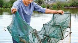 Vùng đất dân đổi đời nhờ nuôi tôm sú to, cua bự ở Cà Mau
