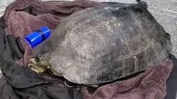 """Nghi vấn cần thủ câu trộm rùa """"khủng"""" nặng gần 15kg ở Hồ Gươm"""