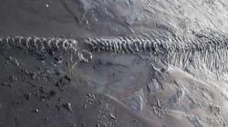 Anh: Dắt chó đi dạo, tình cờ phát hiện bộ xương ngư long 65 triệu năm tuổi nguyên vẹn