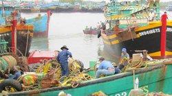 Thông tư 22 hướng đến xây dựng một nghề cá có trách nhiệm, bền vững