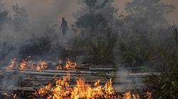 Clip: Cháy rừng ở Amazon vào top ảnh ấn tượng về khủng hoảng khí hậu