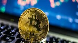 """Tương lai Bitcoin: Đạt mức giá cao nhất trong năm tới và """"tốt hơn vàng""""?"""