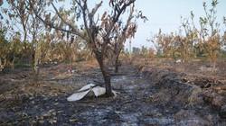 ẢNH-CLIP: Kẻ gian đốt phá 5 sào cây ăn quả của người dân ở Hưng Yên