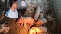 Có hay không, Mavin biết lợn giống nhiễm dịch tả vẫn bán cho dân?