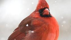 Màn lột xác xuất sắc đỉnh cao của các loài chim ai cũng trầm trồ