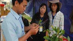 Đơn giản, minh bạch hóa việc công nhận giống cây trồng