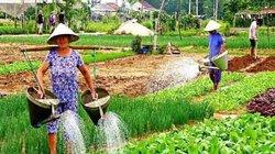 Hội An: Khai trương điểm thăm quan trải nghiệm làng rau Trà Quế