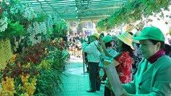 Hơn 2.500 chậu hoa lan hội tụ khoe sắc tại vườn hoa TP. Đà Lạt