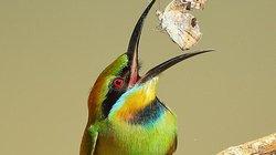 """Ngỡ ngàng khoảnh khắc """"chộp bướm"""" và loạt ảnh cực đẹp về loài chim"""