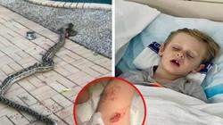 Úc: Trăn dài 4,5m hung hãn đớp trẻ 4 tuổi ở bể bơi lôi đi và cuộc vật lộn kịch tính