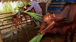 Thanh Hoá: Thoát nghèo nhờ được tặng bò, hỗ trợ xóa nhà lá
