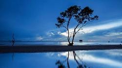 Từ Sài Gòn muốn tìm cây cô đơn gần nhất để check-in thì đi đâu?