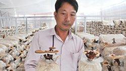 Kiểng lạ ở An Giang: Nấm linh chi chậu trưng 8 tháng mới héo