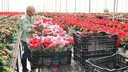 Lâm Đồng bứt phá trong liên kết sản xuất nông nghiệp