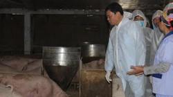 Bộ trưởng NN&PTNT: Tái đàn lợn linh hoạt, đa dạng thực phẩm khác