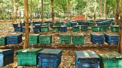 Cùng nhau nuôi ong sạch, nhóm nông dân này đều thành triệu phú