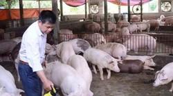 Giá heo hơi hôm nay 25/12: Lo Tết thiếu thịt heo, ùn ùn nhập khẩu