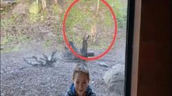 Video: Đang chụp ảnh ở vườn thú, bất ngờ bị hổ dữ lao tới vồ từ phía sau