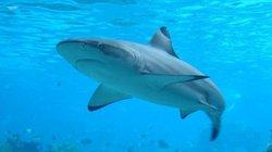3 ngư dân bất ngờ bị loài cá mập nguy hiểm nhất dài 4,5 mét truy đuổi