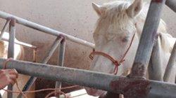 Thái Nguyên: Nhanh giàu hơn nhờ nuôi ngựa bạch, gà ngon