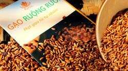 """Trồng lúa trên ruộng rươi ra thứ gạo sạch, """"chất như nước cất"""""""