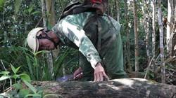 Vô rừng Kbang săn loài nấm quý, bán giá cả triệu đồng mỗi ký