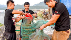 Chợ tôm, cá sơn thủy hữu tình, có những chậu cá bống cực ngon