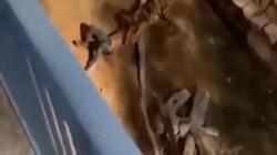 Ả rập Saudi: Thanh niên bị hổ vồ trong chuồng, đội giải cứu bắn 4 phát chưa hạ nổi thú dữ