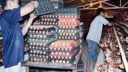 Mỗi ngày bán hàng vạn trứng gà sạch, bỏ túi hàng chục triệu đồng