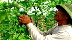 Hướng về cơ sở, tháo gỡ  khó khăn cho nông dân