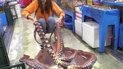 """Thiếu nữ xinh đẹp """"vật lộn"""" sơ chế bạch tuộc khổng lồ nặng 13kg"""