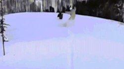 """Video: Bị hắt tuyết kín thân, gà gô rừng đuổi theo người quyết """"rửa hận"""" đến cùng"""